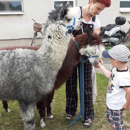 Galeria Alpaki przedszkole 2021